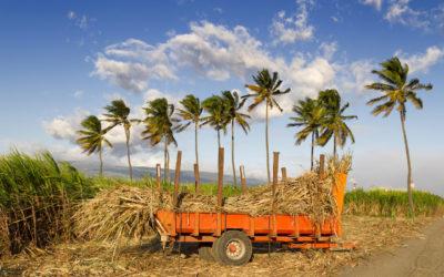 CDPENAF de La Réunion et permis de construire en zone agricole : rétrospective sur des jurisprudences récentes du tribunal administratif de La Réunion